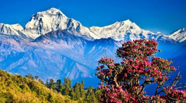 Ghorepani Poon Hill Trek (8 days)
